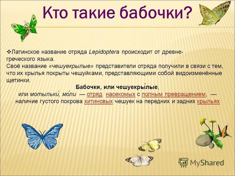 Кто такие бабочки? Латинское название отряда Lepidoptera происходит от древне- греческого языка. Своё название «чешуекрызлые» представители отряда получили в связи с тем, что их крылья покрыты чешуйками, представляющими собой видоизменённые щетинки.