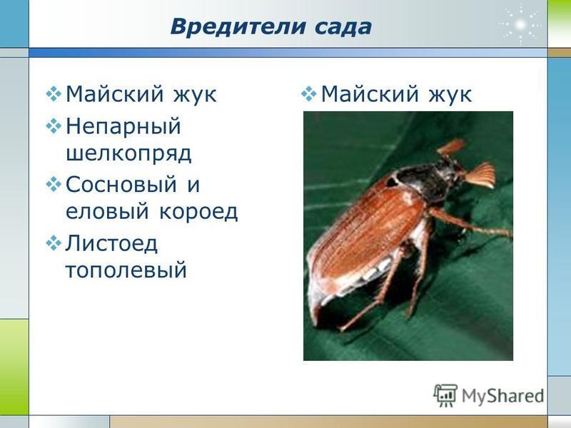 Вредители сада Майский жук Непарный шелкопряд Сосновый и еловый короед Листоед тополевый Майский жук