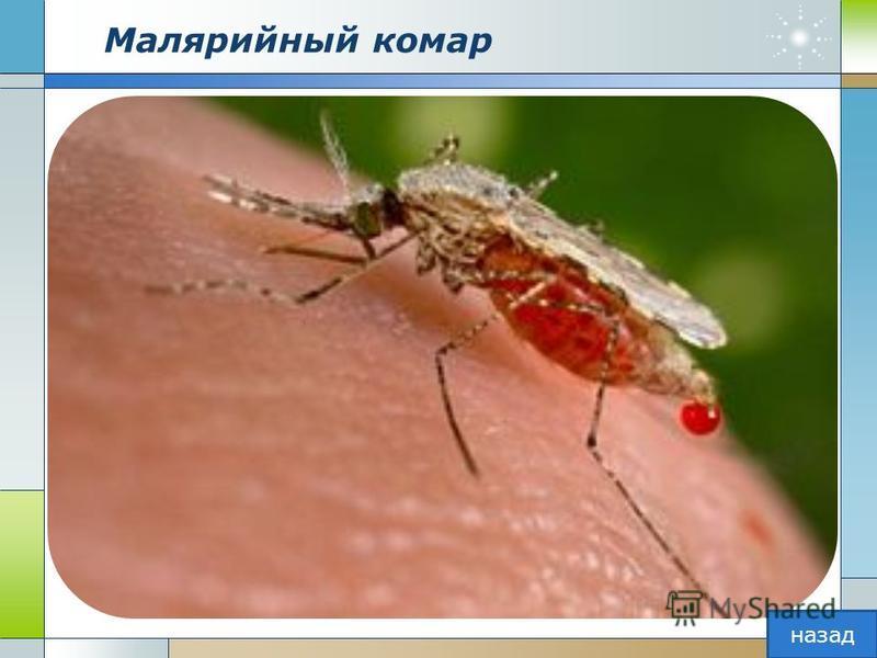 Малярийный комар назад