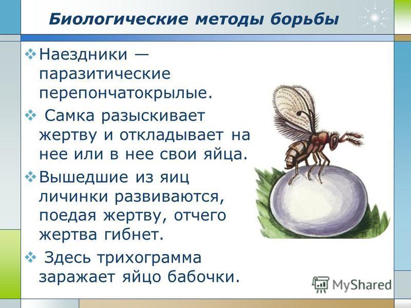 Биологические методы борьбы Наездники паразитические перепончатокрылые. Самка разыскивает жертву и откладывает на нее или в нее свои яйца. Вышедшие из яиц личинки развиваются, поедая жертву, отчего жертва гибнет. Здесь трихограмма заражает яйцо бабоч