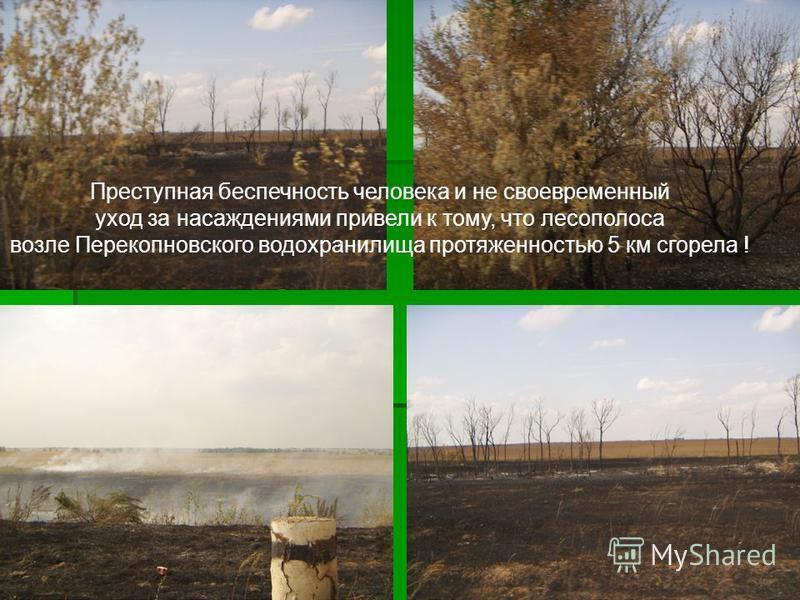 Преступная беспечность человека и не своевременный уход за насаждениями привели к тому, что лесополоса возле Перекопновского водохранилища протяженностью 5 км сгорела !