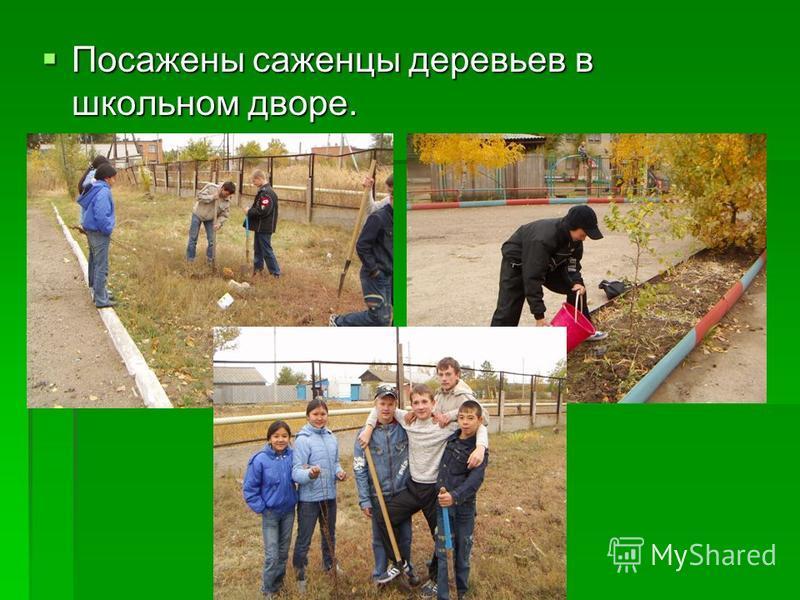 Посажены саженцы деревьев в школьном дворе. Посажены саженцы деревьев в школьном дворе.