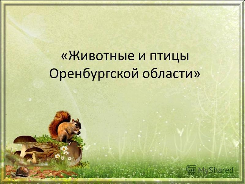 «Животные и птицы Оренбургской области»