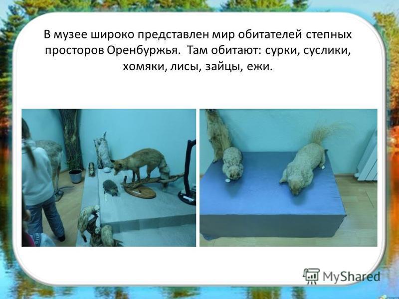 В музее широко представлен мир обитателей степных просторов Оренбуржья. Там обитают: сурки, суслики, хомяки, лисы, зайцы, ежи.