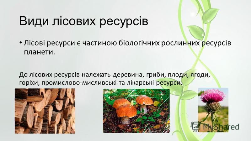 Види лісових ресурсів Лісові ресурси є частиною біологічних рослинних ресурсів планети. До лісових ресурсів належать деревина, гриби, плоди, ягоди, горіхи, промислово-мисливські та лікарські ресурси.