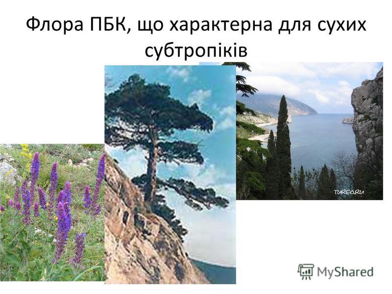 Флора ПБК, що характерна для сухих субтропіків
