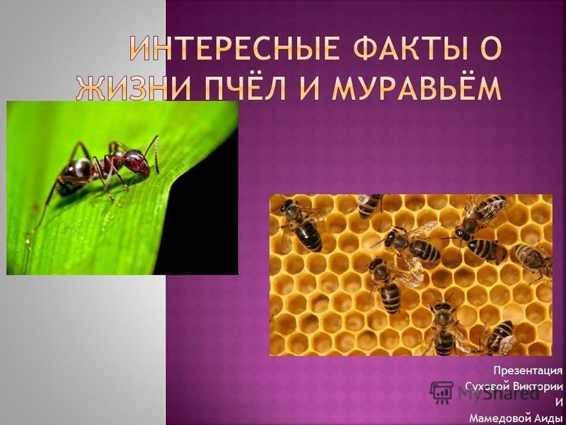 Презентация Суховой Виктории И Мамедовой Аиды