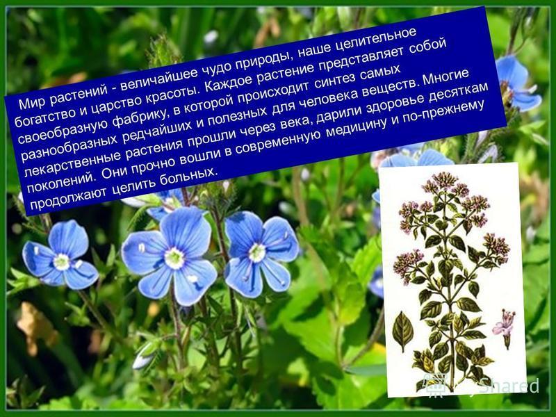 Мир растений - величайшее чудо природы, наше целительное богатство и царство красоты. Каждое растение представляет собой своеобразную фабрику, в которой происходит синтез самых разнообразных редчайших и полезных для человека веществ. Многие лекарстве