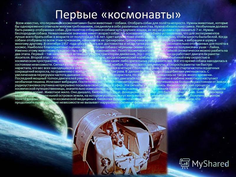 Первые «космонавты» Всем известно, что первыми «космонавтами» были животные – собаки. Отобрать собак для полёта непросто. Нужны животные, которые бы одновременно отвечали многим требованиям, соединяли в себе различные качества. Нужна обязательно самк