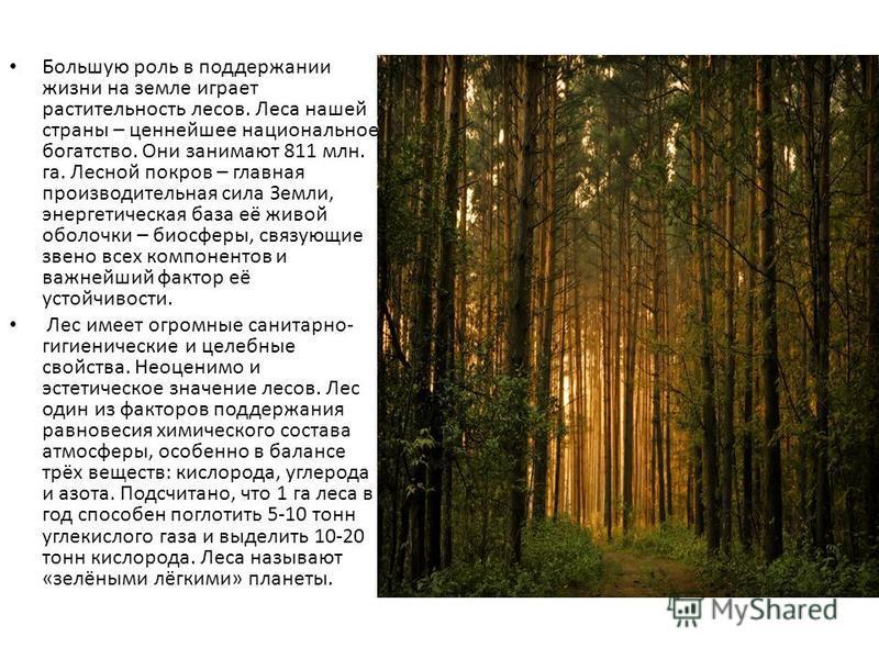 Большую роль в поддержании жизни на земле играет растительность лесов. Леса нашей страны – ценнейшее национальное богатство. Они занимают 811 млн. га. Лесной покров – главная производительная сила Земли, энергетическая база её живой оболочки – биосфе
