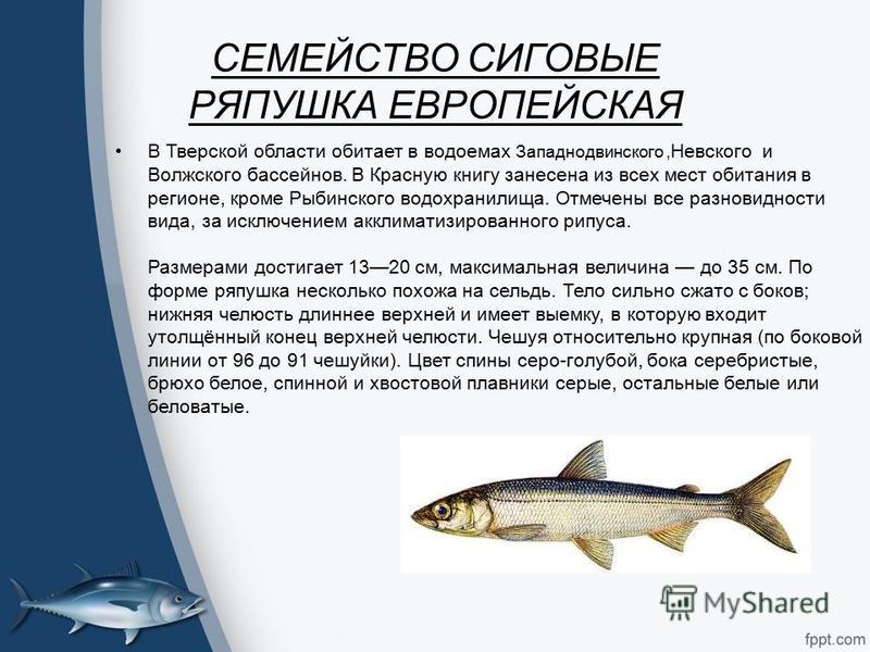 Скачать бесплатно книгу рыбы россии