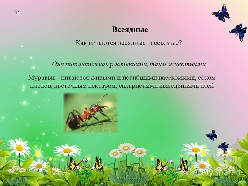 Всеядные Как питаются всеядные насекомые? Они питаются как растениями, так и животными. Муравьи – питаются живыми и погибшими насекомыми, соком плодов, цветочным нектаром, сахаристыми выделениями тлей 11