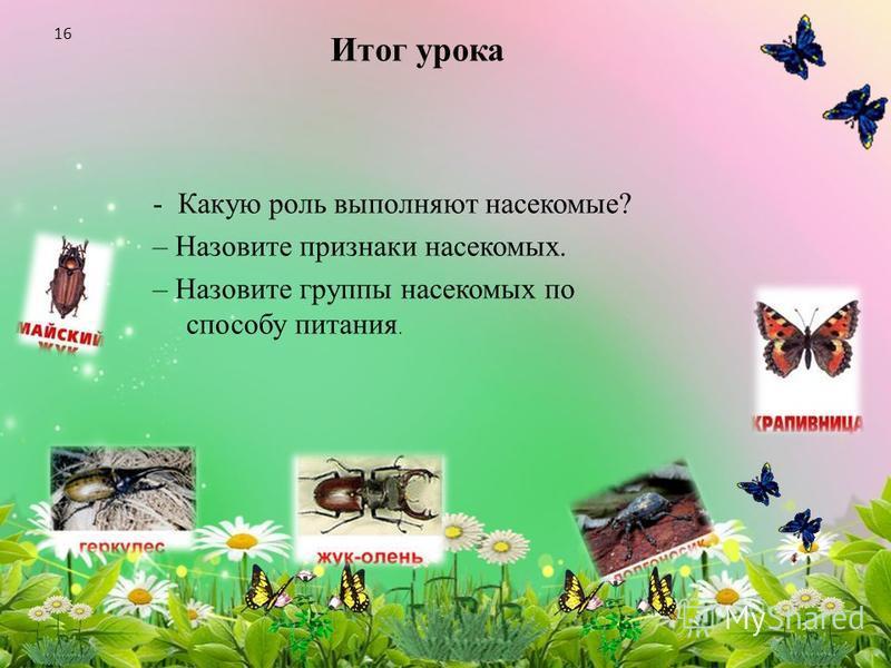 Итог урока - Какую роль выполняют насекомые? – Назовите признаки насекомых. – Назовите группы насекомых по способу питания. 16