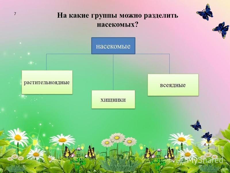 На какие группы можно разделить насекомых? растительноядные хищники всеядные насекомые 7