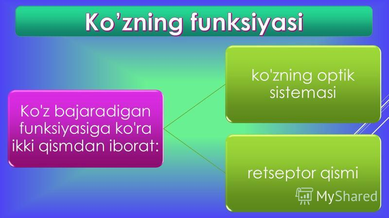 Ko'z bajaradigan funksiyasiga ko'ra ikki qismdan iborat: ko'zning optik sistemasi retseptor qismi