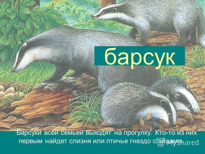 барсук Барсуки всей семьей выходят на прогулку. Кто-то из них первым найдет слизня или птичье гнездо с яйцами.