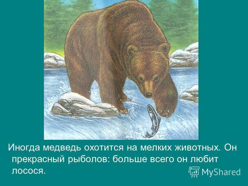 Иногда медведь охотится на мелких животных. Он прекрасный рыболов: больше всего он любит лосося.