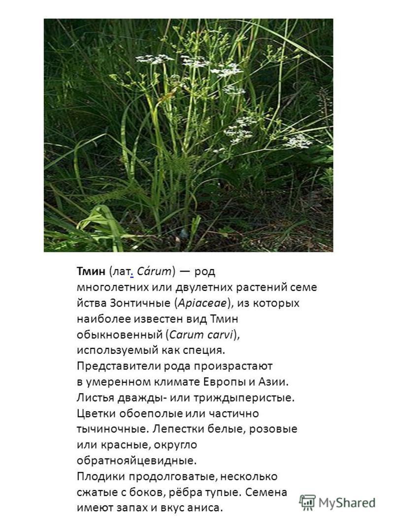 Тмин (лат. Cárum) род многолетних или двулетних растений семейства Зонтичные (Apiaceae), из которых наиболее известен вид Тмин обыкновенный (Carum carvi), используемый как специя.. Представители рода произрастают в умеренном климате Европы и Азии. Ли