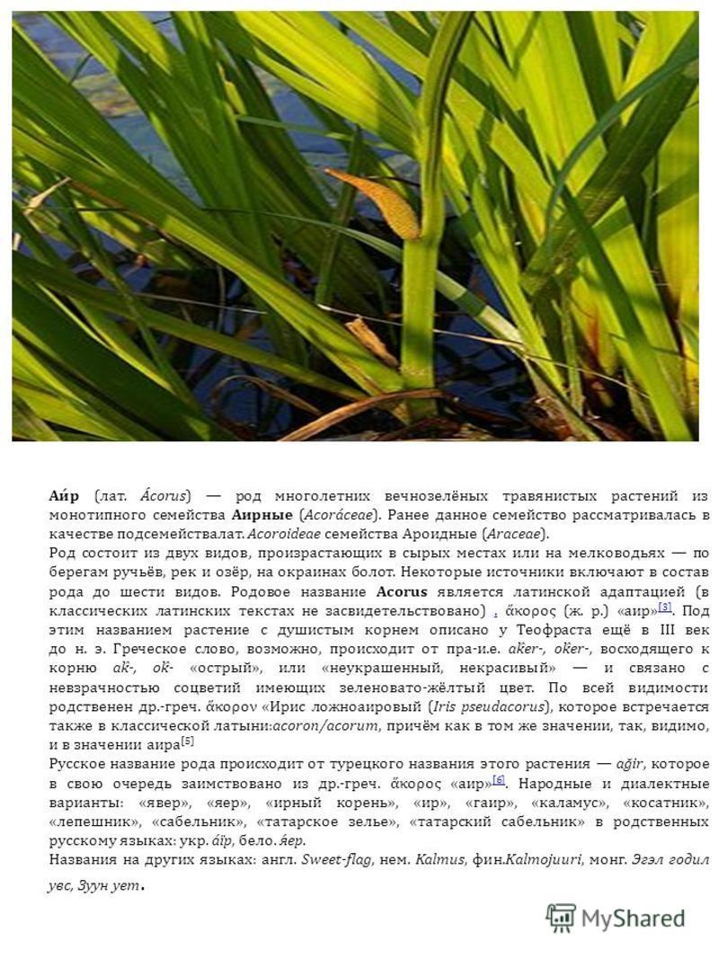 Аи́р (лат. Ácorus) род многолетних вечнозелёных травянистых растений из монотипного семейства Аирные (Acoráceae). Ранее данное семейство рассматривалась в качестве подсемейства лат. Acoroideae семейства Ароидные (Araceae). Род состоит из двух видов,