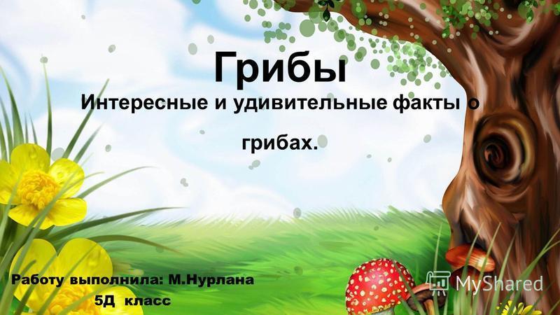 Грибы Интересные и удивительные факты о грибах. Работу выполнила: М.Нурлана 5Д класс