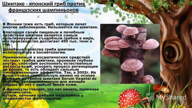 Шиитаке - японский гриб против французских шампиньонов :) В Японии тоже есть гриб, которым лечат многие заболевания. Называется он шиитаке. Благодаря своим пищевым и лечебным свойствам шиитаке является самым культивируемым съедобным грибом в мире, ег