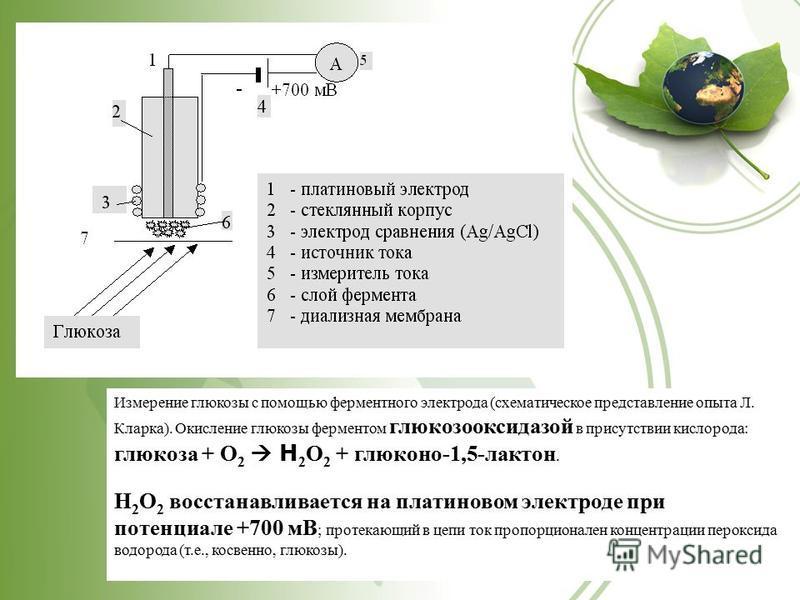 Измерение глюкозы с помощью ферментного электрода (схематическое представление опыта Л. Кларка). Окисление глюкозы ферментом глюкозооксидазой в присутствии кислорода: глюкоза + О 2 Н 2 О 2 + глюконо-1,5-лактон. Н 2 О 2 восстанавливается на платиновом