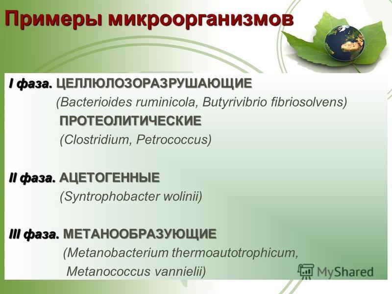 I фаза. ЦЕЛЛЮЛОЗОРАЗРУШАЮЩИЕ (Bacterioides ruminicola, Butyrivibrio fibriosolvens) ПРОТЕОЛИТИЧЕСКИЕ ПРОТЕОЛИТИЧЕСКИЕ (Clostridium, Petrococcus) II фаза. АЦЕТОГЕННЫЕ (Syntrophobacter wolinii) III фаза. МЕТАНООБРАЗУЮЩИЕ (Metanobacterium thermoautotroph