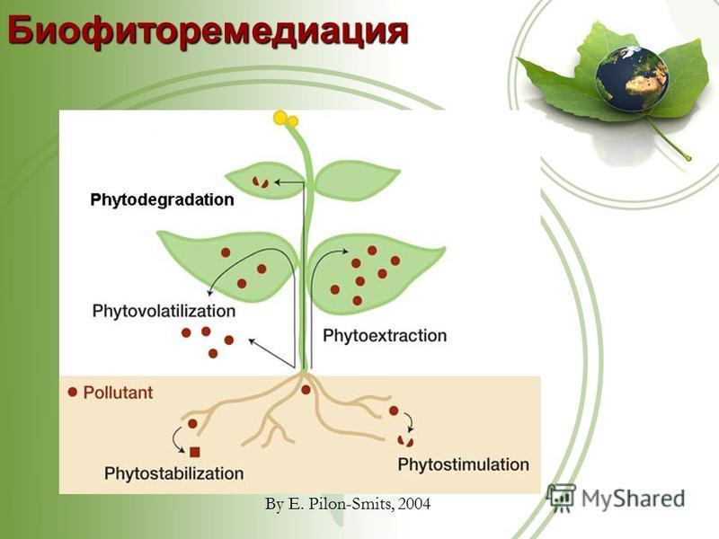 Биофиторемедиация By E. Pilon-Smits, 2004