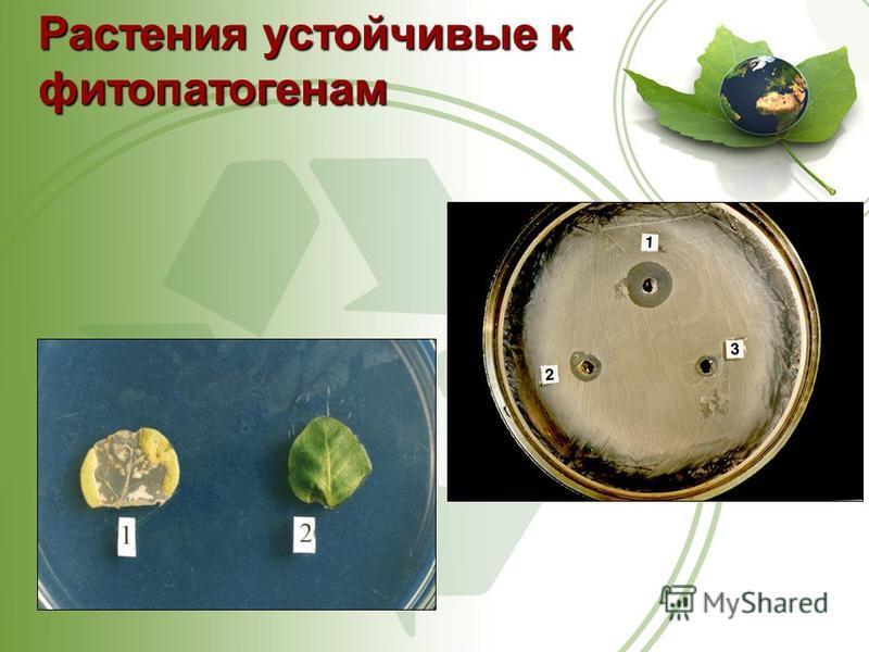 Растения устойчивыек фитопатогенам Растения устойчивые к фитопатогенам