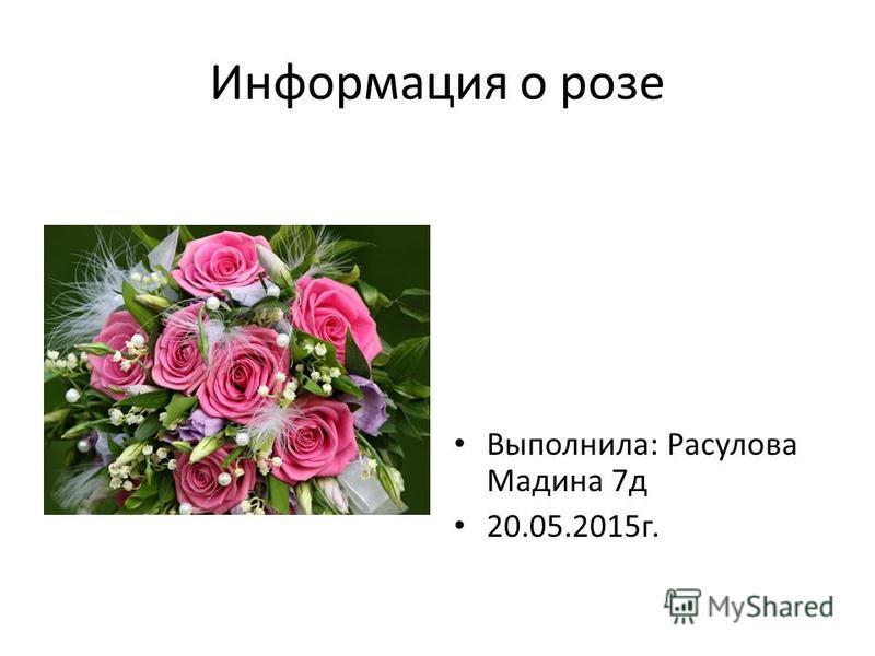 Информация о розе Выполнила: Расулова Мадина 7 д 20.05.2015 г.