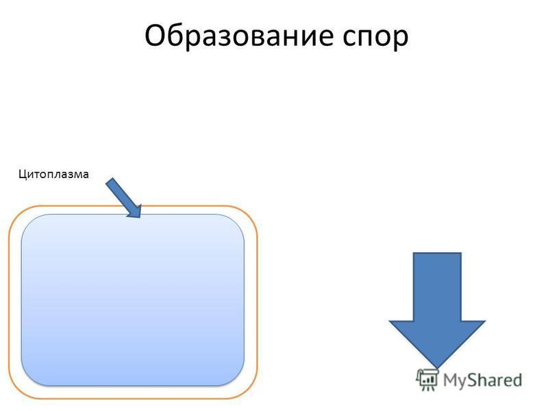 Образование спор Цитоплазма
