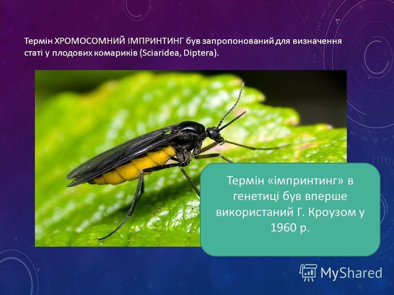 Термін ХРОМОСОМНИЙ ІМПРИНТИНГ був запропонований для визначення статі у плодових комариків (Sciaridea, Diptera). Термін «імпринтинг» в генетиці був вперше використаний Г. Кроузом у 1960 р.