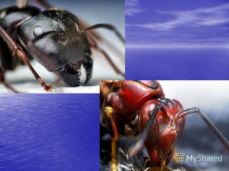 Возможно, муравьи общаются друг с другом.