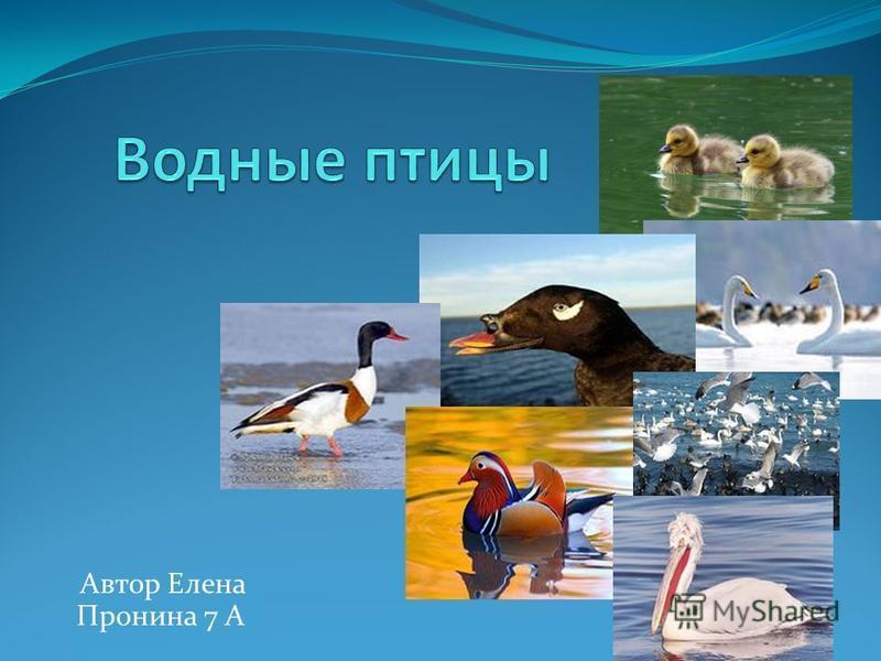 Автор Елена Пронина 7 А