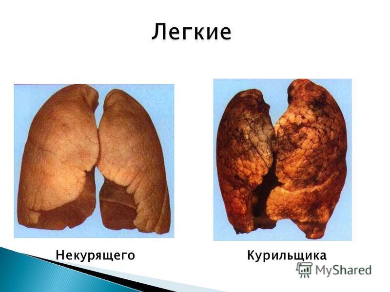 Некурящего Курильщика