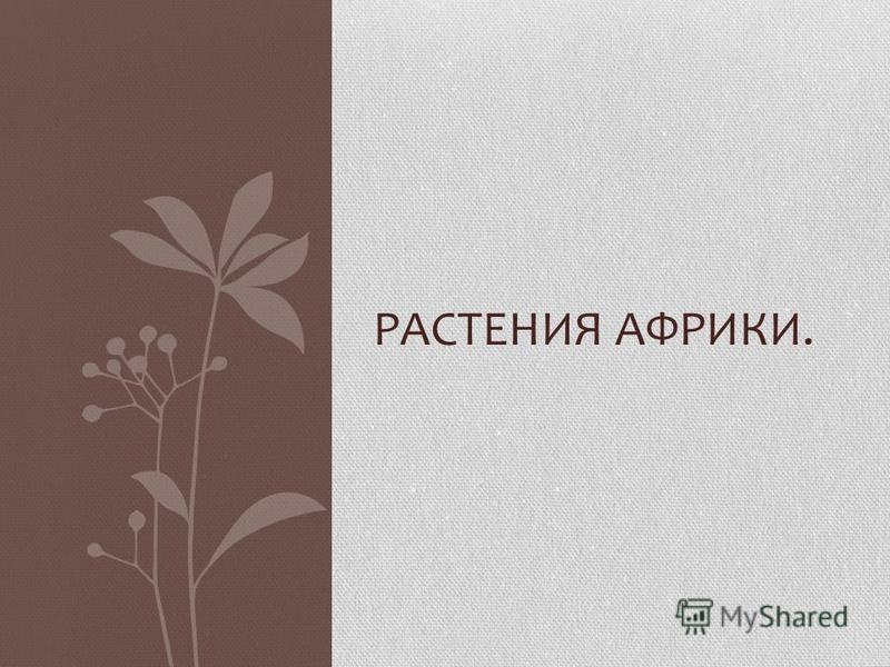 РАСТЕНИЯ АФРИКИ.