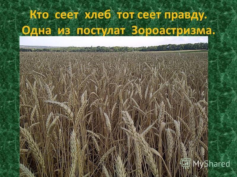Кто сеет хлеб тот сеет правду. Одна из постулат Зороастризма.