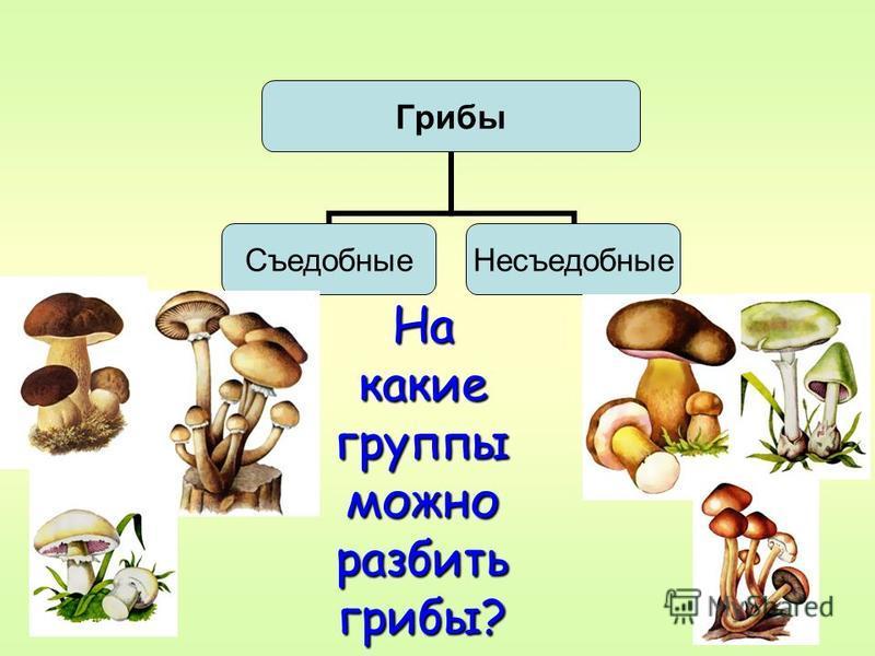 Грибы Съедобные Несъедобные На какие группы можно разбить грибы?
