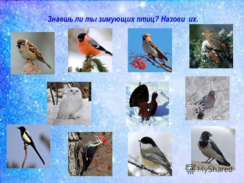 Знаешь ли ты зимующих птиц? Назови их.