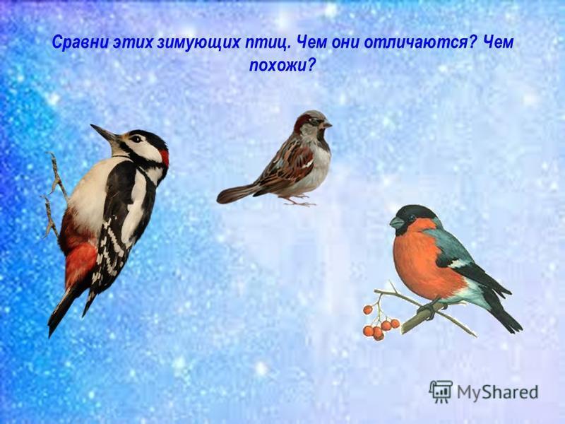 Сравни этих зимующих птиц. Чем они отличаются? Чем похожи?