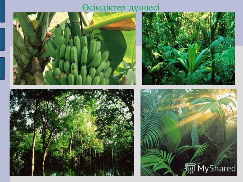 Өсімдіктер дүниесі
