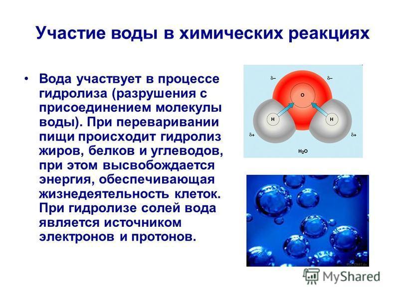 Вода участвует в процессе гидролиза (разрушения с присоединением молекулы воды). При переваривании пищи происходит гидролиз жиров, белков и углеводов, при этом высвобождается энергия, обеспечивающая жизнедеятельность клеток. При гидролизе солей вода
