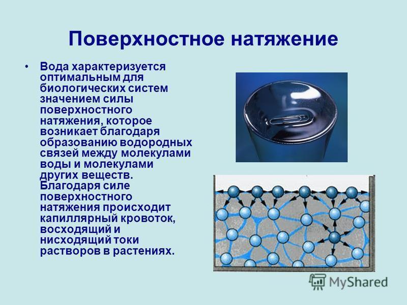 Поверхностное натяжение Вода характеризуется оптимальным для биологических систем значением силы поверхностного натяжения, которое возникает благодаря образованию водородных связей между молекулами воды и молекулами других веществ. Благодаря силе пов