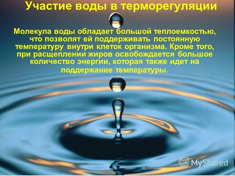 Участие воды в терморегуляции Молекула воды обладает большой теплоемкостью, что позволят ей поддерживать постоянную температуру внутри клеток организма. Кроме того, при расщеплении жиров освобождается большое количество энергии, которая также идет на