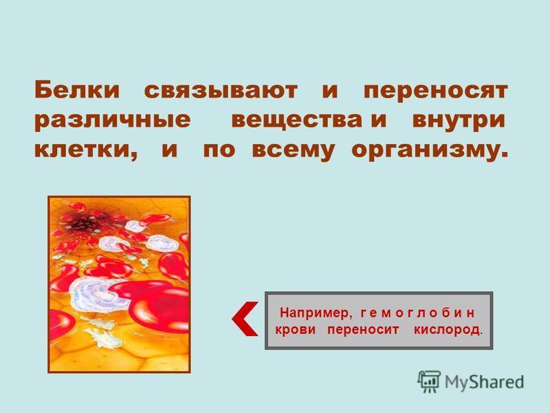Белки связывают и переносят различные вещества и внутри клетки, и по всему организму. Например, г е м о г л о б и н крови переносит кислород.