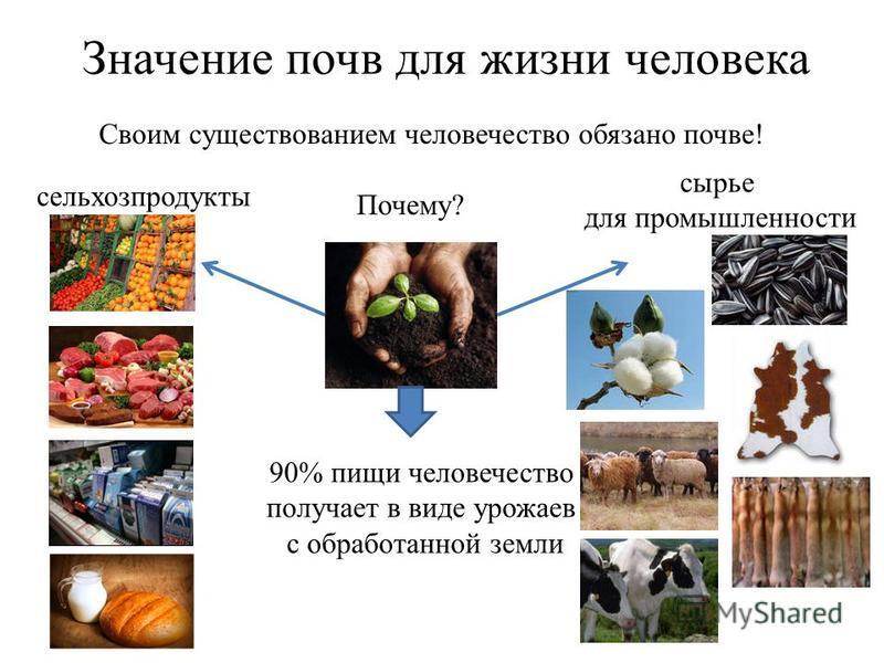 Значение почв для жизни человека Своим существованием человечество обязано почве! Почему? сельхозпродукты сырье для промышленности 90% пищи человечество получает в виде урожаев с обработанной земли