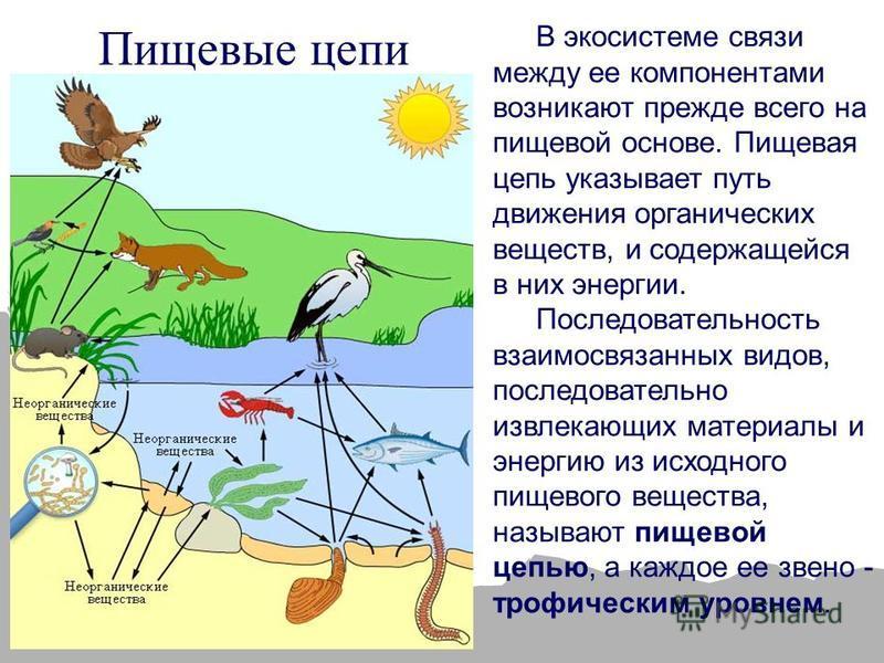 В экосистеме связи между ее компонентами возникают прежде всего на пищевой основе. Пищевая цепь указывает путь движения органических веществ, и содержащейся в них энергии. Последовательность взаимосвязанных видов, последовательно извлекающих материал