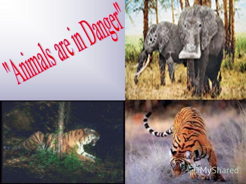 marshall university admissions essay Endangered Animals