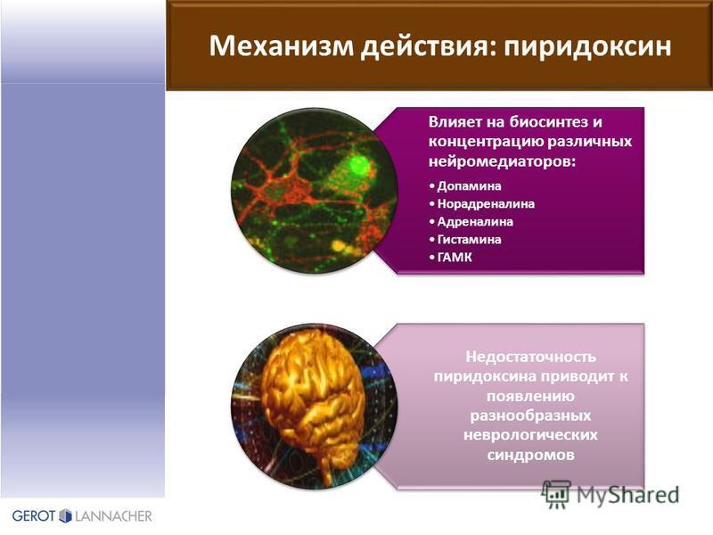 Механизм действия: пиридоксин Влияет на биосинтез и концентрацию различных нейромедиаторов: Допамина Норадреналина Адреналина Гистамина ГАМК Недостаточность пиридоксина приводит к появлению разнообразных неврологических синдромов