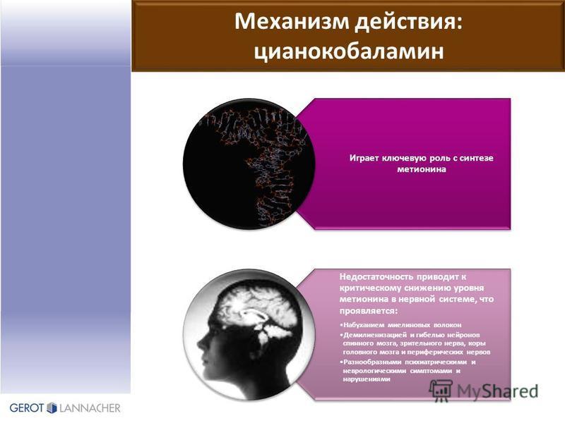 Механизм действия: цианокобаламин Играет ключевую роль с синтезе метионина Недостаточность приводит к критическому снижению уровня метионина в нервной системе, что проявляется: Набуханием миелиновых волокон Демилиенизацией и гибелью нейронов спинного